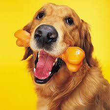foto educar perro